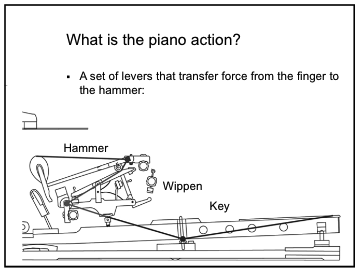 definition-the-piano-action-is-a-set-of-levers-that-transfer-force-from-the-finger-to-the-hammer-with-diagram-showiwng-key-wippen-and-hammer
